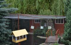 На подвір`ї монастиря є багато птахів, плаваючих також