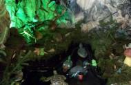 У цьогорічному вертепі є також і водяний куточок, де плавають рибки і качечки, а також витікає малий фонтанчик води.