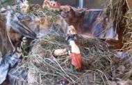 При монастирі Чину Братів Менших в Тернополі знаходиться теж вольєр для птахів (20 видів фазанів, 5 видів голубів, павичі, курочки, екзотичні качечки, страуси) Посередині цього вольєру знаходиться вертепик з Ісусом і Його родиною.