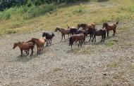 і коні нас вітали